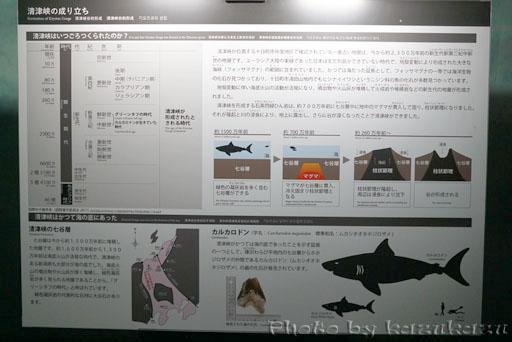 2009210320_12.jpg