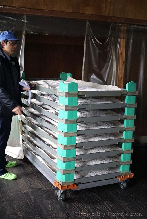 岐阜県美濃加茂市太田本町の御代桜醸造の蒸米